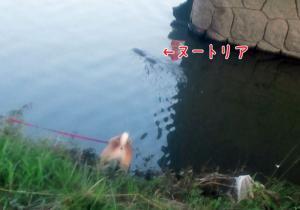 20110828-003.jpg