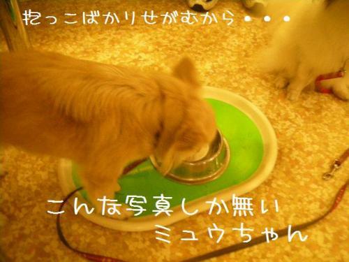 2009_0828_185958-DSCN6345.jpg