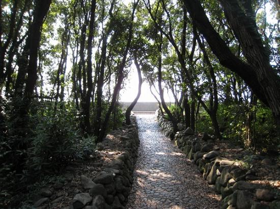 2009/08/31須ノ川公園海水浴林の出口