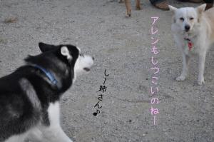 11.20愛ハス10