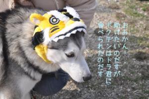 12.26愛ハス1