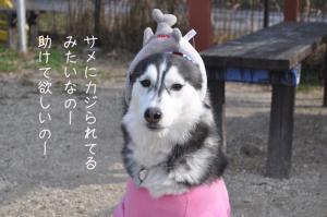 12.26愛ハス