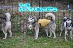 2011.3.20告知1