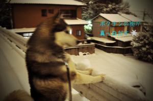 01.15雪1