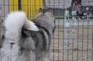 02.06愛ハス1