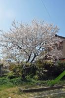 04.14桜