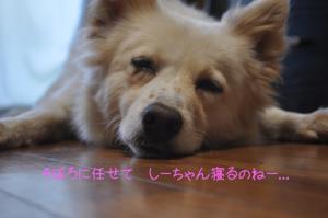 07.03愛ハス2