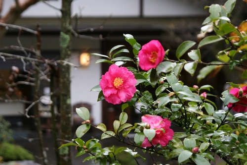 mitake-aki_220.jpg