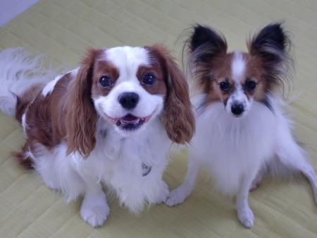 パール&ライ☆