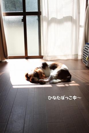 日向ぼっこ♪