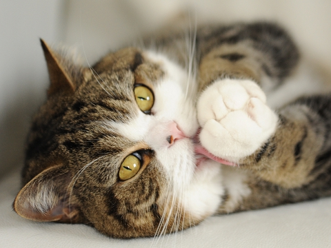 Maru:[Because I became 4 years old, please ...