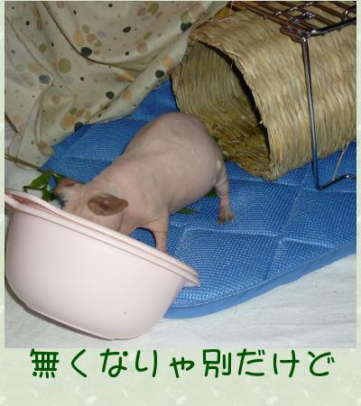 わらの家3