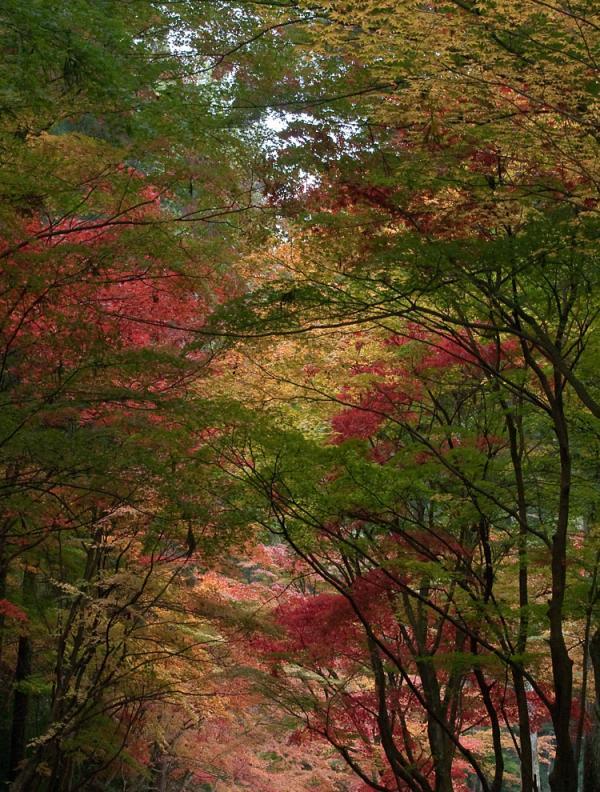 小国神社の紅葉1