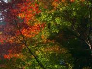 小国神社の紅葉4