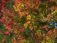 小国神社の紅葉5