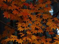 小国神社の紅葉8