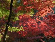 小国神社の紅葉7
