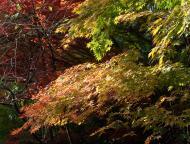 小国神社の紅葉12