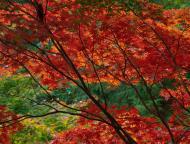 小国神社の紅葉13