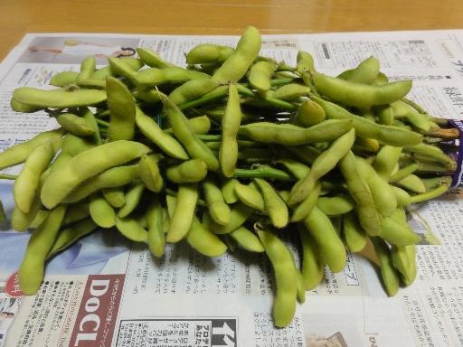 2011-07-03群馬県産枝豆-1