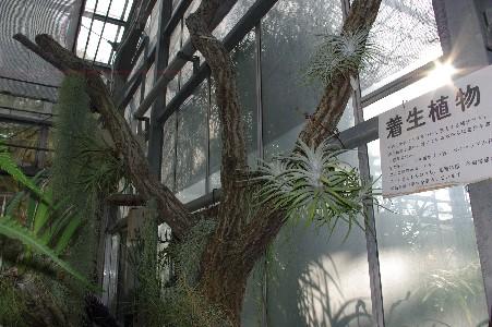 20091123 温室のエアプランツ
