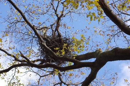 091201鳥の巣