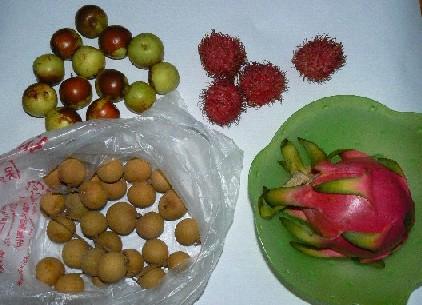 090925果物