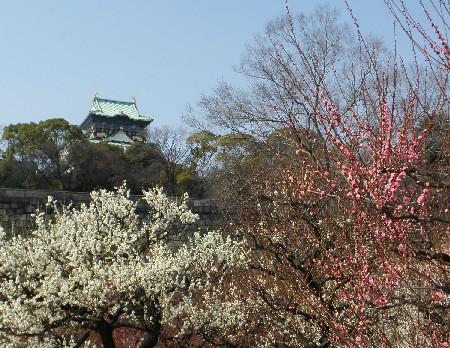 100223大阪城と梅