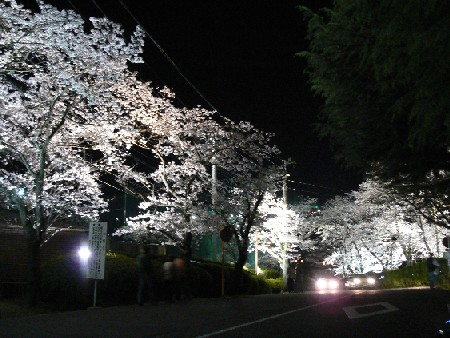 100403夜桜の道