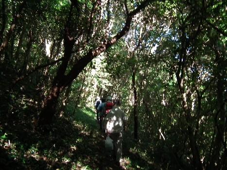 100828林の中
