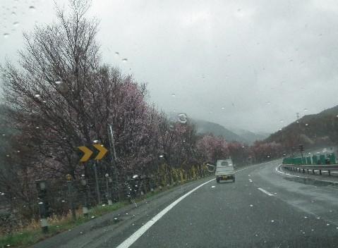 110423-高速道の桜