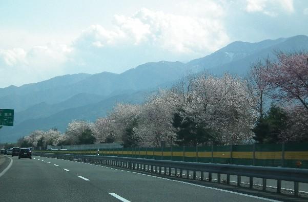 110424-帰りの桜