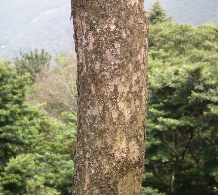 110724-木と