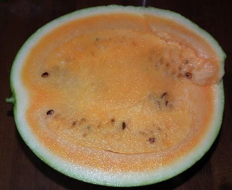 110730-スーパーオレンジ