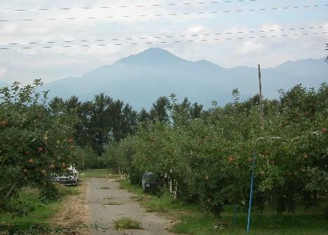 110925-リンゴ畑と山