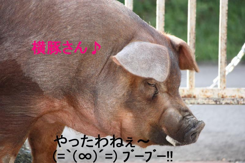 コピー ~ IMG_8413