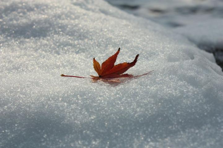 雪の岐阜公園2