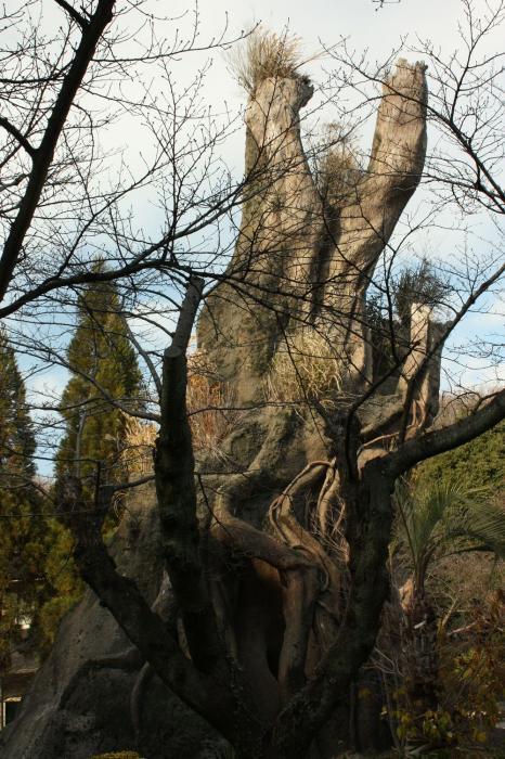 東山植物園A