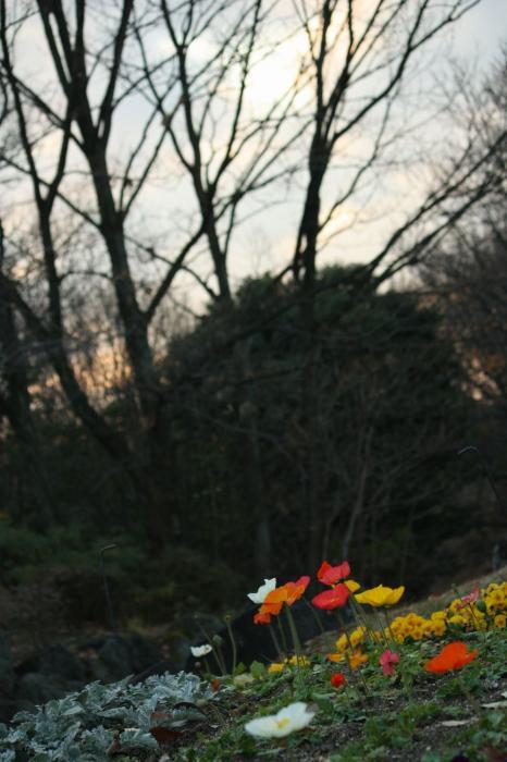 東山植物園D