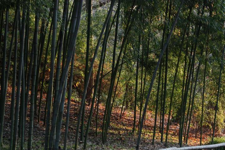 東山植物園G