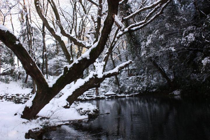岐阜公園 雪3