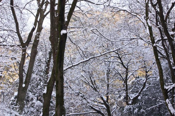 岐阜公園 雪4