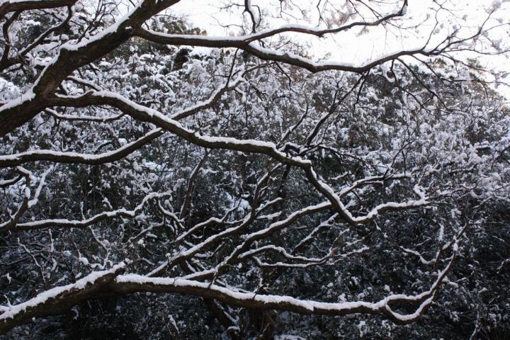 岐阜公園 雪6