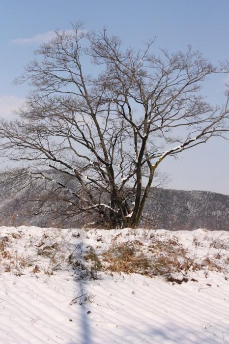岐阜公園 雪8