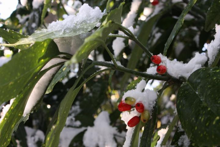 岐阜公園 植物3