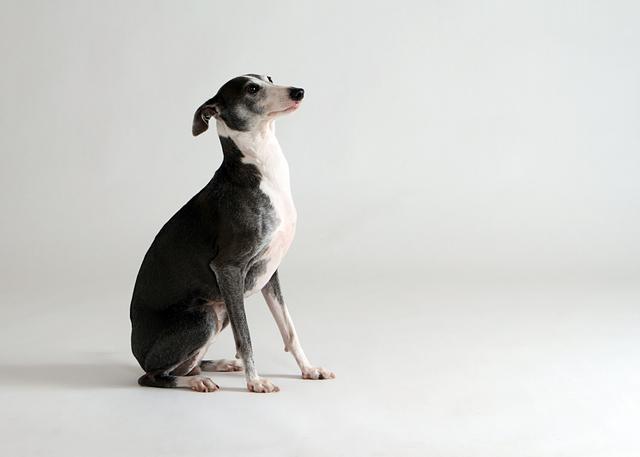 ペット 撮影 写真