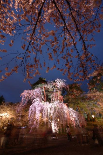 20110430 弘前城 弘前公園 弘前さくらまつり