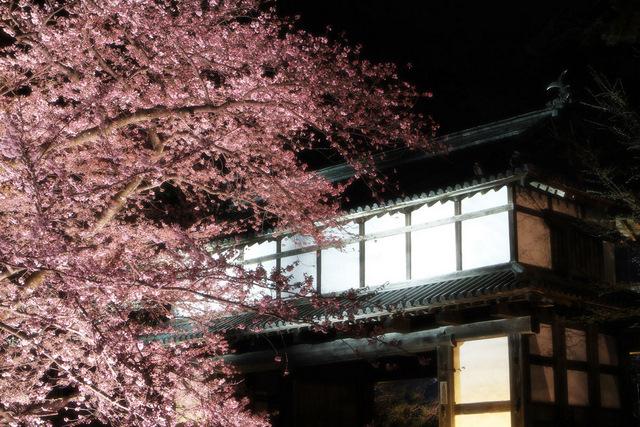 20110430 弘前城 弘前さくらまつり 弘前公園