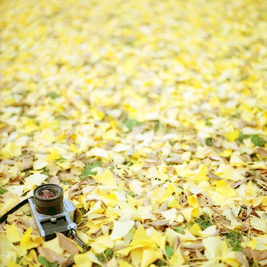 黄色い絨毯とニコンF。