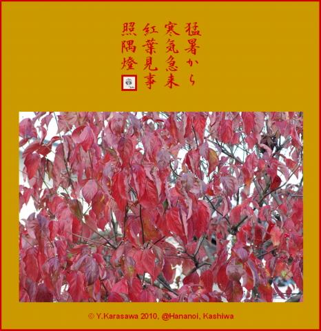 101113花水木の紅葉